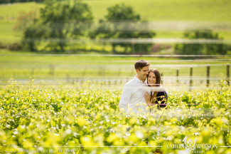 vineyard engagement pictures